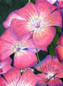 """""""Pacific Pink"""" By Sandra Livingston"""