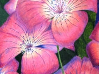 Pacific Pink by Sandra Livingston.jpg
